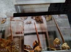 Immagini della Sacra Spina (Cattedrale di Andria)